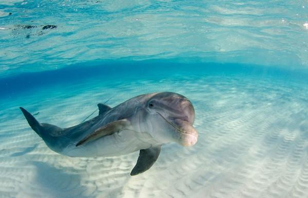 Dolphin_1-600x386